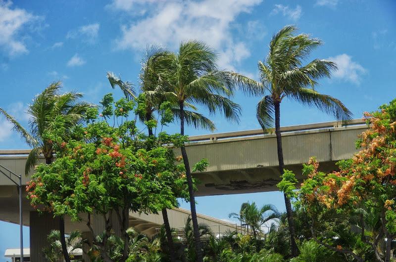 06-17-13 Travel to Oahu - IMGP6820.JPG