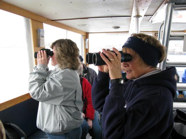 Seal Cruise - seal22.jpg