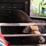 Welpen - Naar de boerderij - IMG_5519.JPG