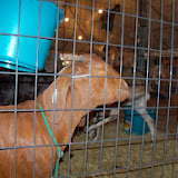 Fort Bend County Fair 2013 - 115_7927.JPG