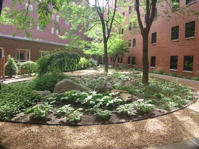 Shady Courtyard Garden at Baystate Hospital