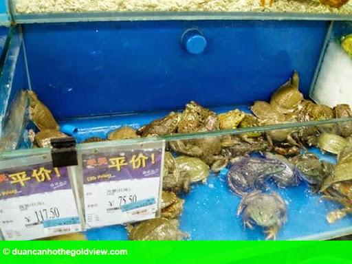 Hình 7: Hãi hùng cá sấu nguyên con, cá mập được bày bán trong siêu thị