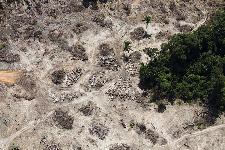 Rousseff's administration is now the one responsible for targets set by the previous administration, led by the more environmentally minded Lula, to reduce deforestation in the Amazon by a further 300,000 hectares. Photograph: Daniel Beltrá/Greenpeace