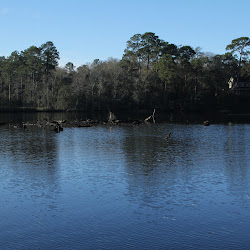 Fowl Marsh from Boat Feb3 2013 069