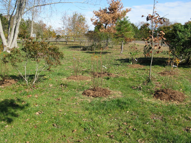 Hammo Planting - Shannon Schiesser - IMG_4963.JPG