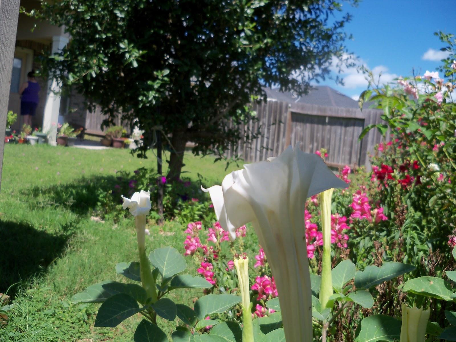 Gardening 2012 - 115_2523.JPG