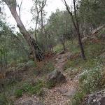 Birrawana Track towards Apple Tree Bay (119695)