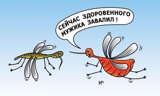 komar-xvavstun