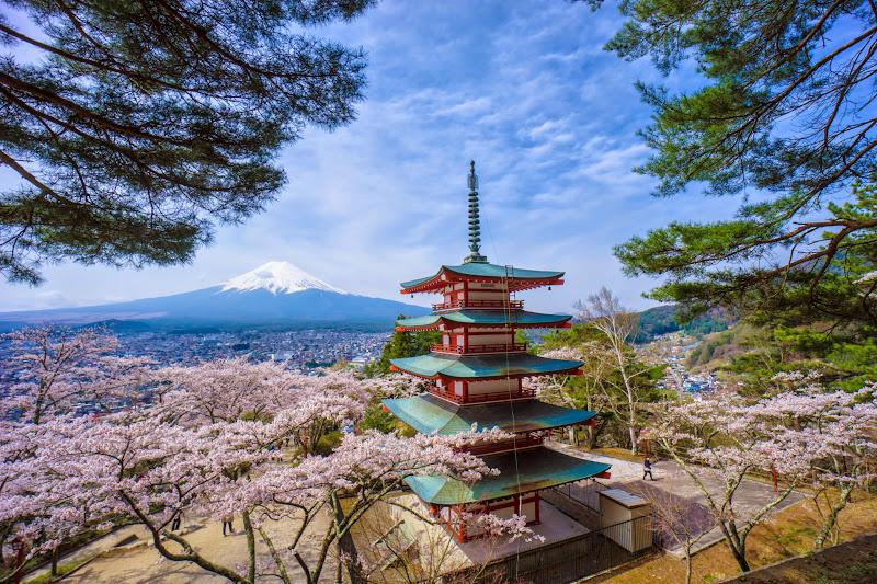 新倉富士浅間神社 桜 富士山 写真2
