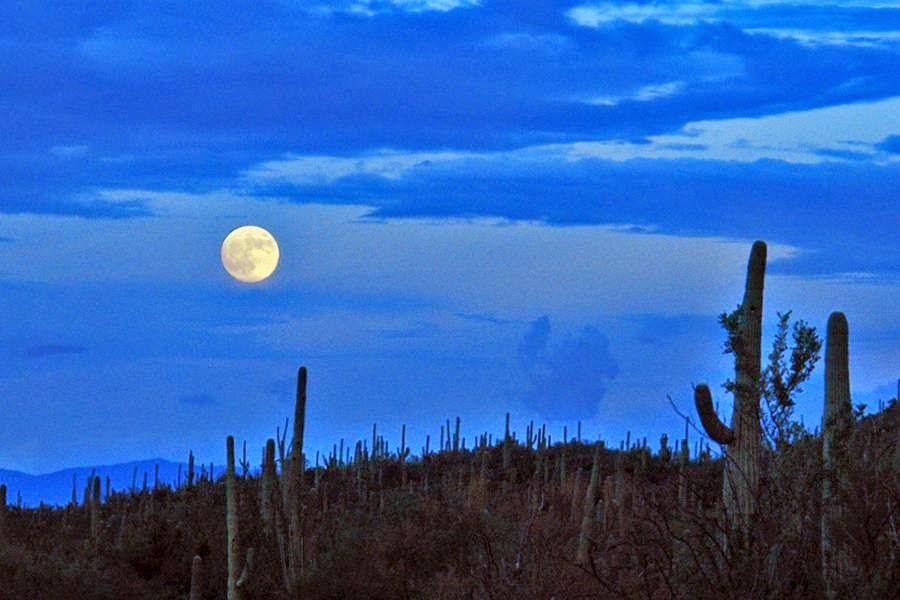 Parque Nacional Saguaro, Estados Unidos de América