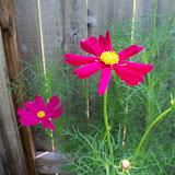 Gardening 2010, Part Two - 101_3295.JPG