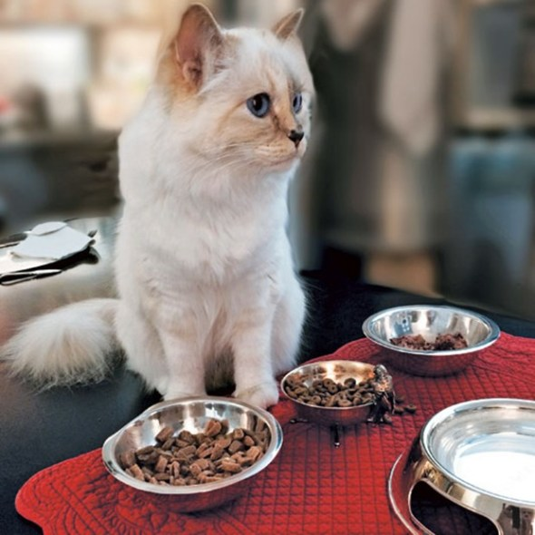 BEAUTIFUL FASHIONABLE PETS WOMEN CAN OWN IN THEIR HOME TO ENJOY 9