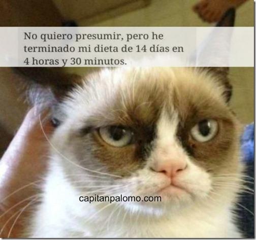 meme del gato gruñon (14)