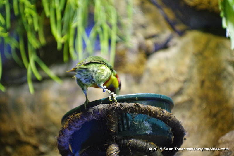 03-11-15 Dallas World Aquarium - _IMG1013.JPG