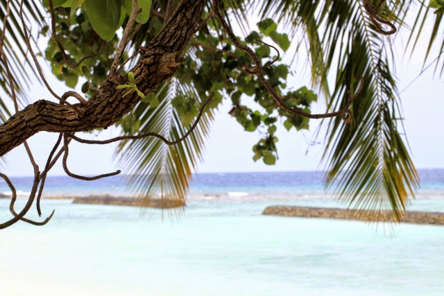 Kuramathi Island beach life