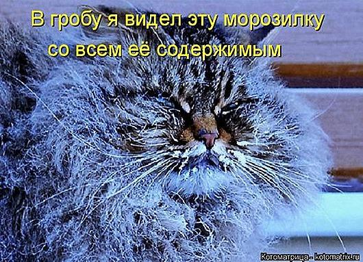 1452279974_kotomatricy-11