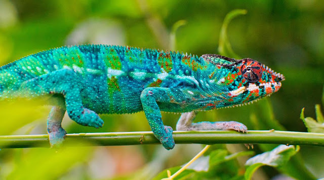 75 Colourful But Scary Reptiles 3
