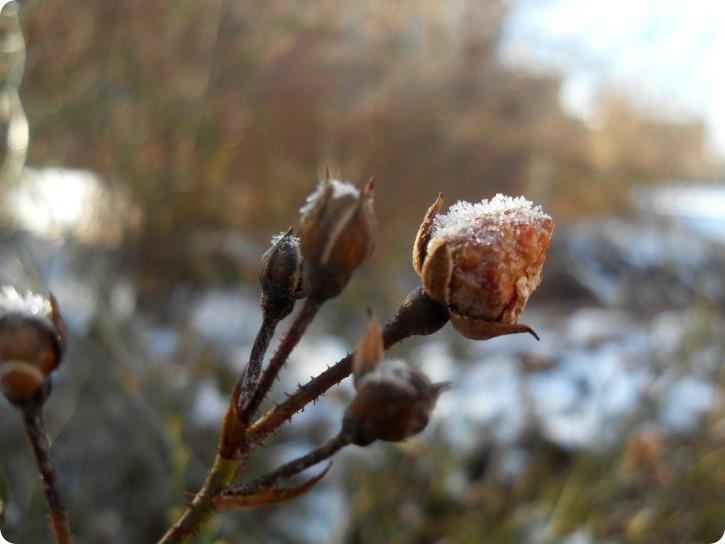 Frostvejr