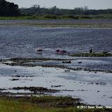 04-06-12 Myaka River State Park - IMGP4465.JPG