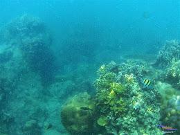 Pulau Harapan, 16-17 Mei 2015 GoPro  11