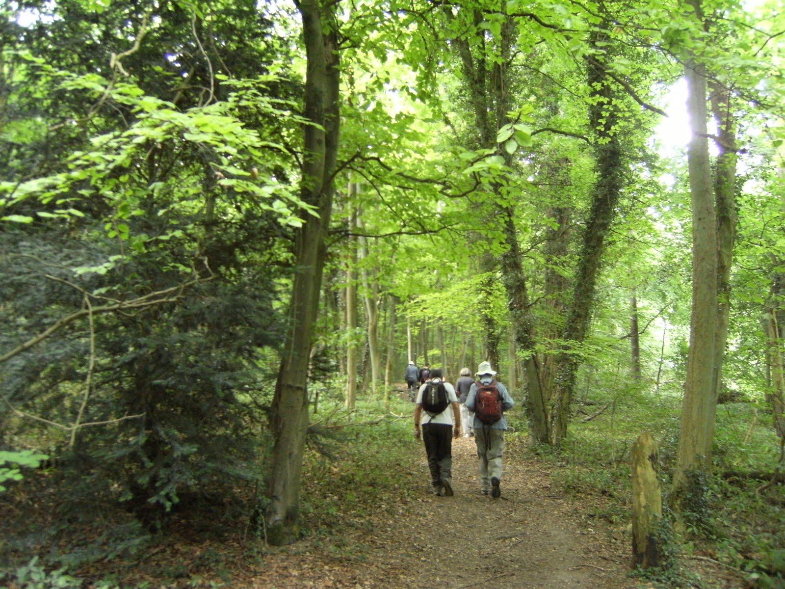 DSCF9328 Through Great Wood