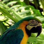 Cute varicoloured parrot