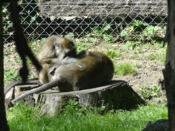 2017.08.06-042 macaques pêcheurs