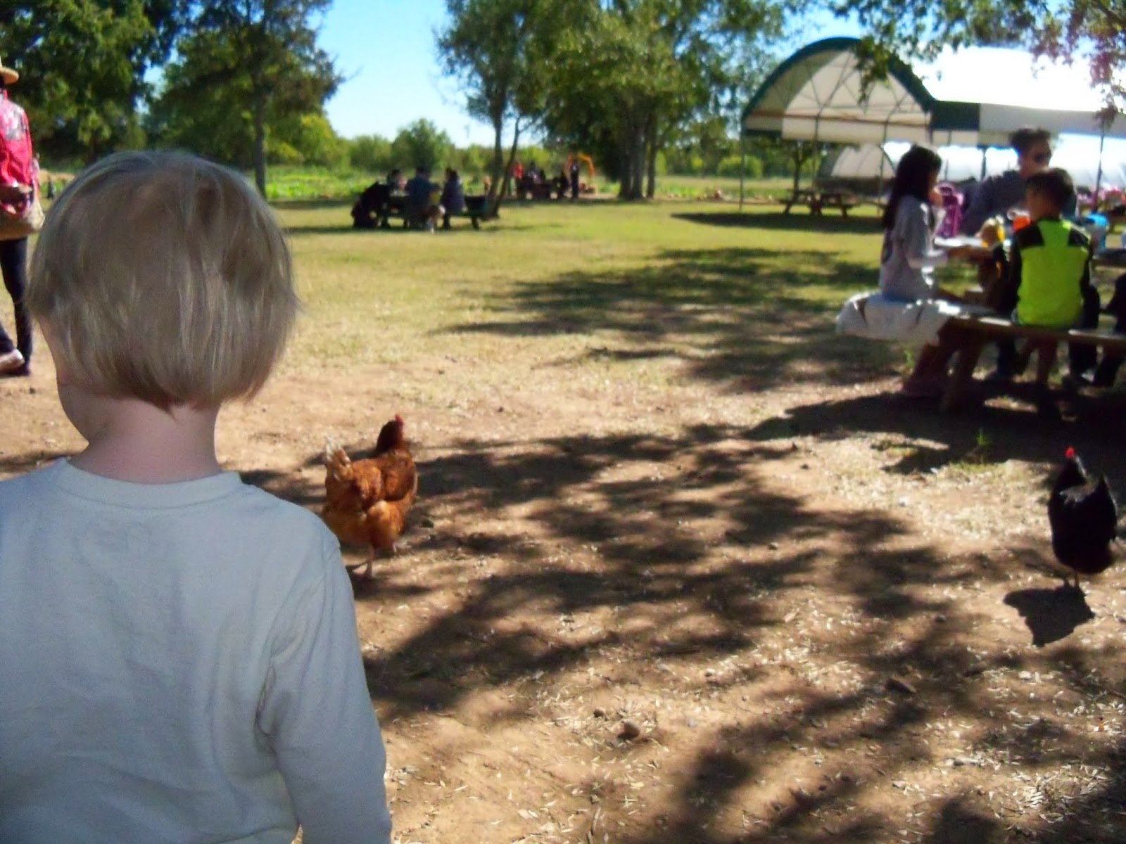 Blessington Farms - 116_5078.JPG