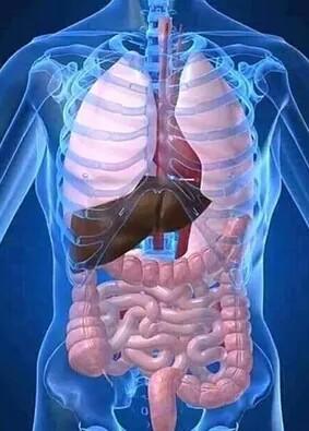 insulin hormones secretion