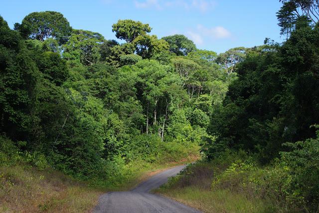 La D6 entre Patawa et Kaw, 24 octobre 2012. Photo : J.-M. Gayman