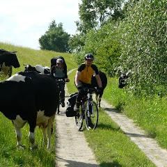 Samopaszące się krowy = szczęśliwe krowy ;)