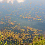 20160528_Fishing_Stara_Moshchanytsia_036.jpg