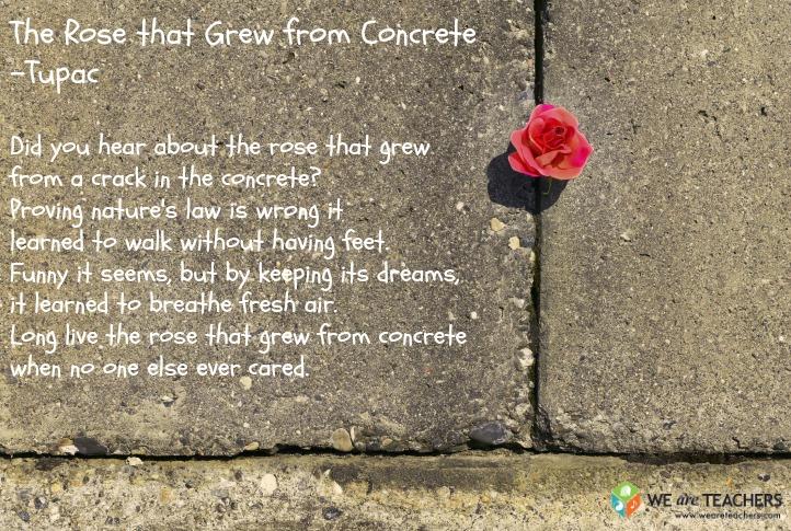 the rose that grew through concrete