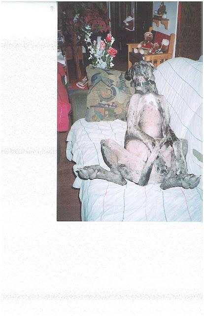 Dynamite Danes Family Album #2 - Winston_Earl_sleeping.JPG