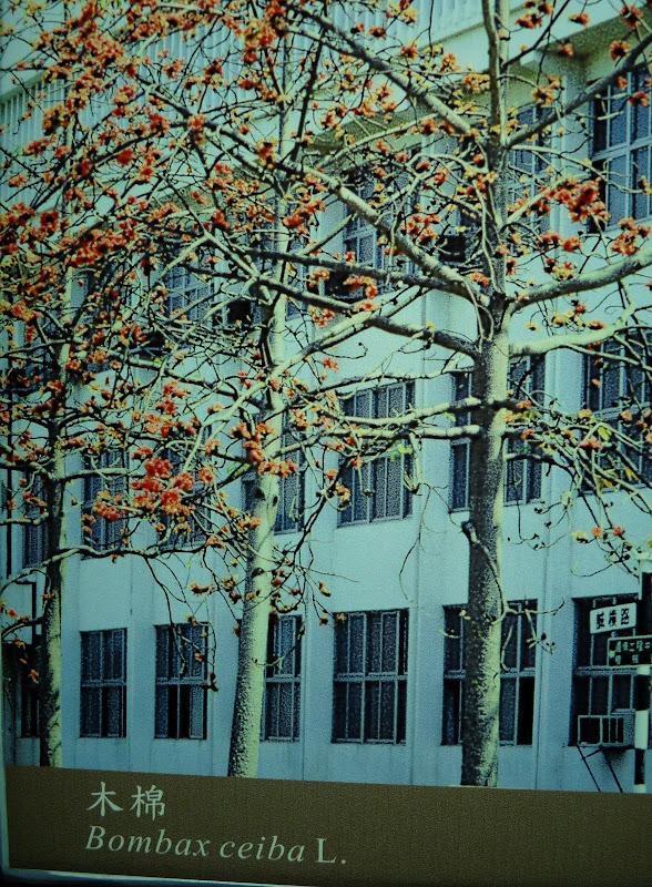 l arbre symbole de Kinmen
