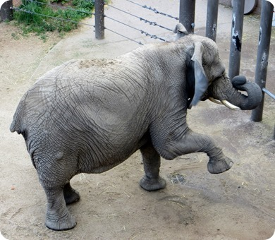 Elephant at Cheyenne Mountain Zoo