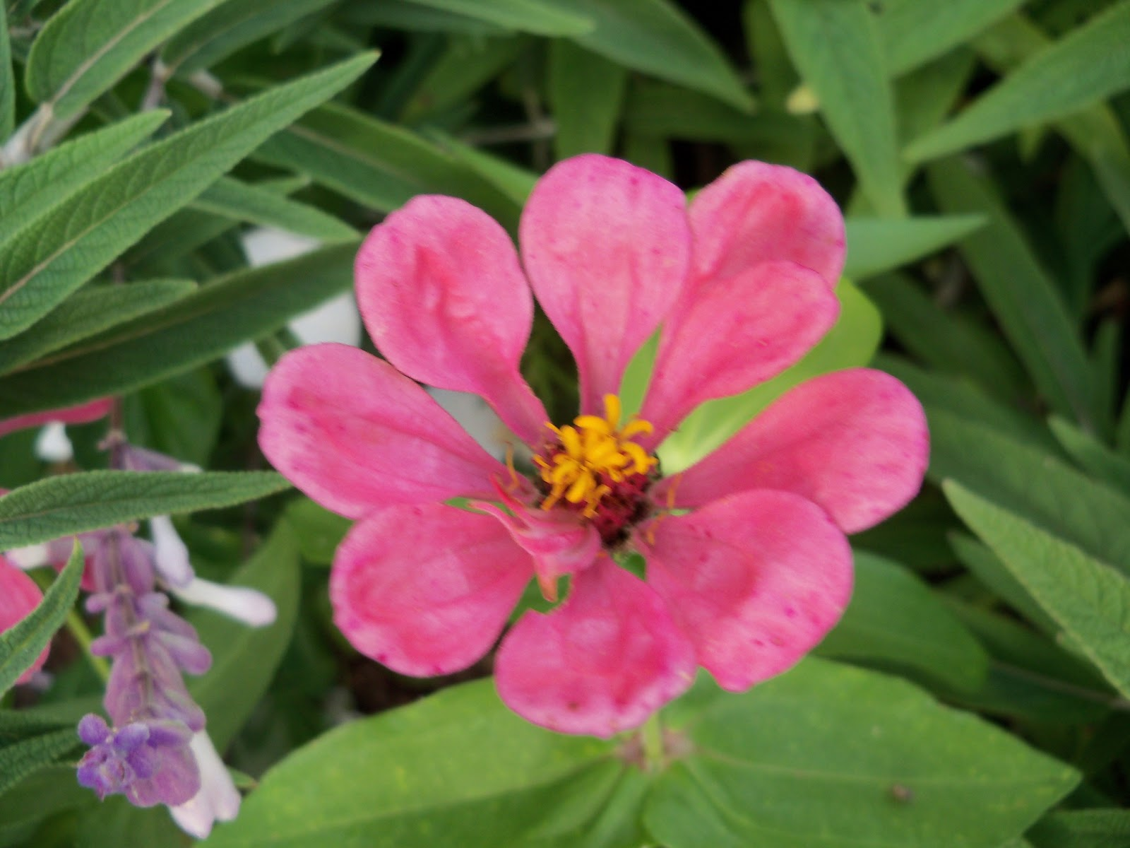 Gardening 2012 - 115_1759.JPG
