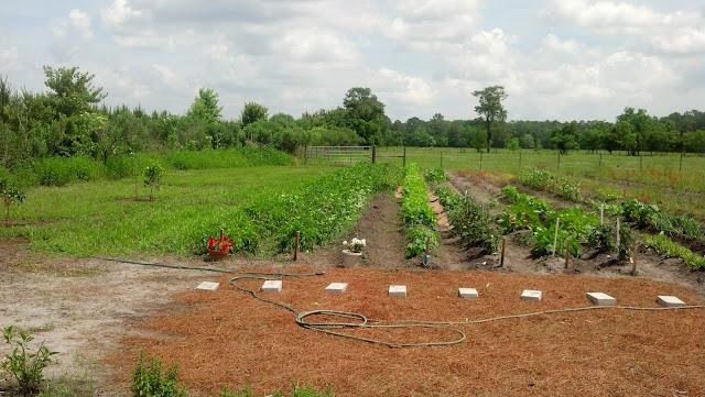 OLGC Garden Ministry 2014 - Garden%2BMay%2B2014.JPG