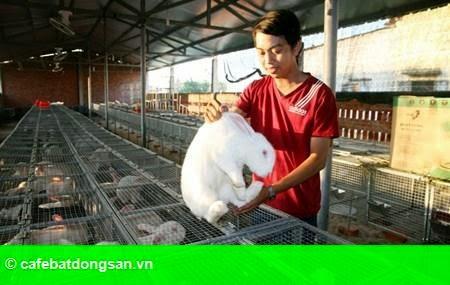 Hình 1: Công tử 9x nuôi thỏ thu tiền tỷ