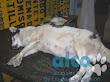 campaña esterilizacion VES 2008 (4)
