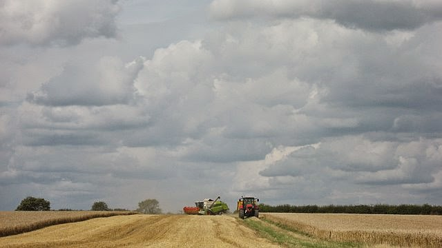 Manor Farm Harvest - August 2008 - pic03.jpg