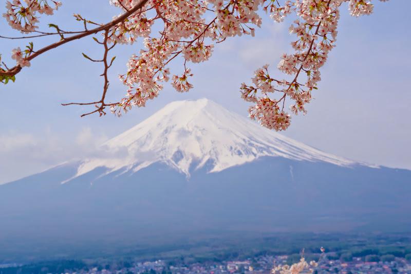 新倉富士浅間神社 桜 富士山 写真5