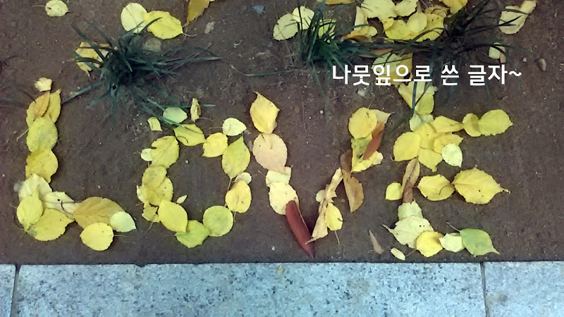 페르디의 가을나무_책놀이
