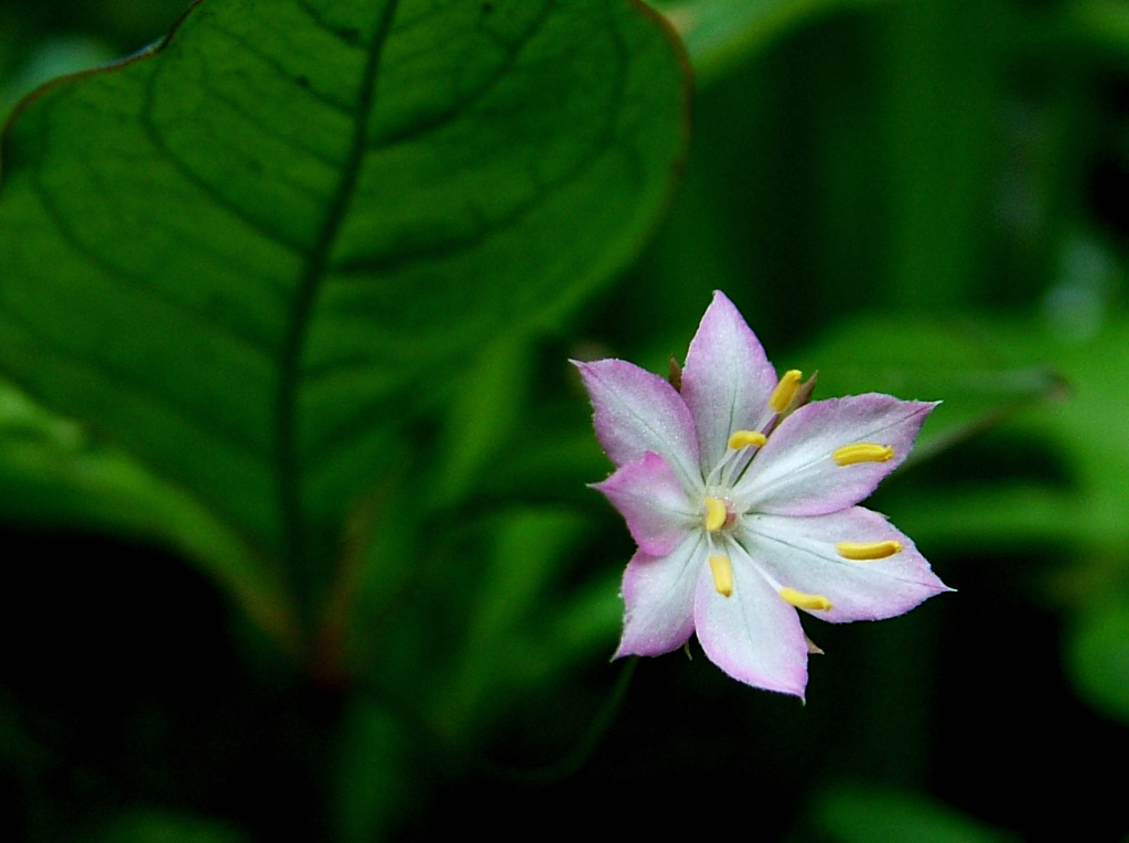 """""""Pacific Star Flower"""" by Michael Laakso"""