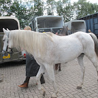 paarden4daagse Zorgvliet 2012 030.jpg