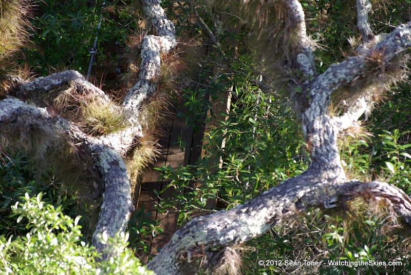 04-06-12 Myaka River State Park - IMGP4435.JPG