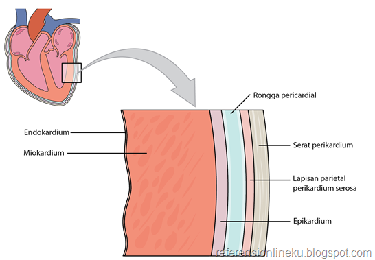 Struktur dinding jantung