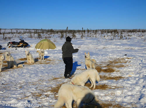Arctic Canada Inuvik Winter Camping Tundra Dog Sledding // Feeding the dogs after a long day on the tundra