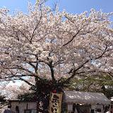 2014 Japan - Dag 7 - maureen-2014-04-05%2B12.38.13-0014.jpg