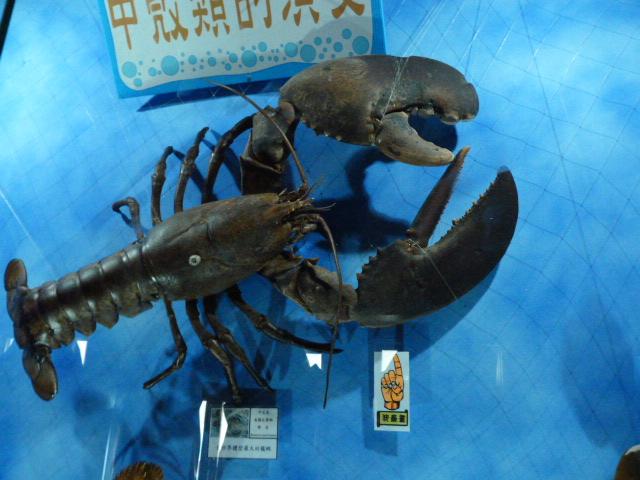 TAIWAN.Toucheng .musée du crabe situé au Pei Kan Resort, surfers,maison Japonaise du chef de gare - P1080722.JPG